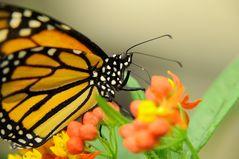 Schmetterlingsaustellung 2