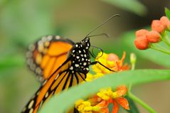 Schmetterlingsaustellung