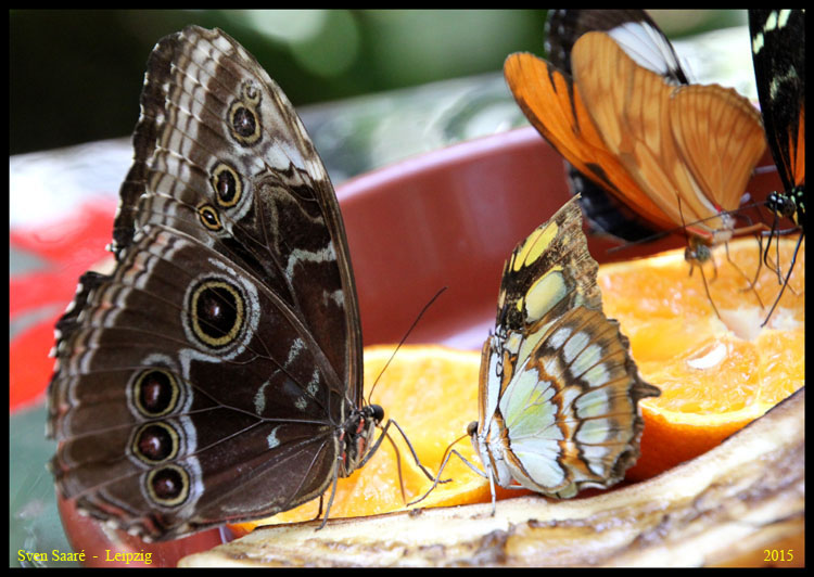 Schmetterlingsgespräche