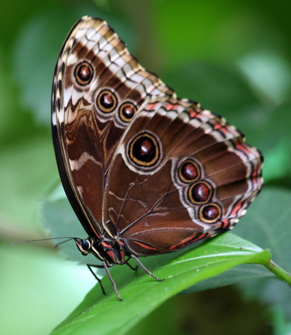 Schmetterlingshaus 7 - [Name nicht bekannt]