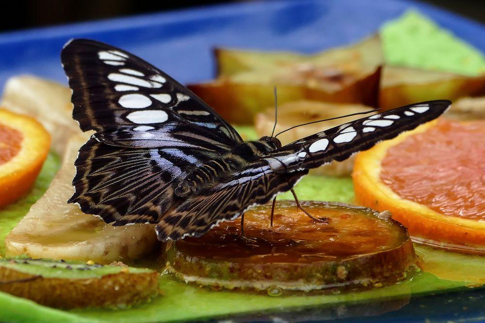 Schmetterlingshaus auf der EGA Teil 2