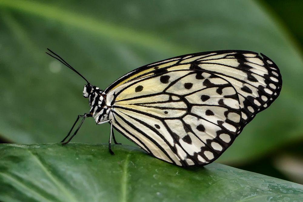 Schmetterlingshaus auf der EGA Teil1