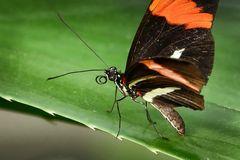 Schmetterlingshaus auf der EGA Teil3