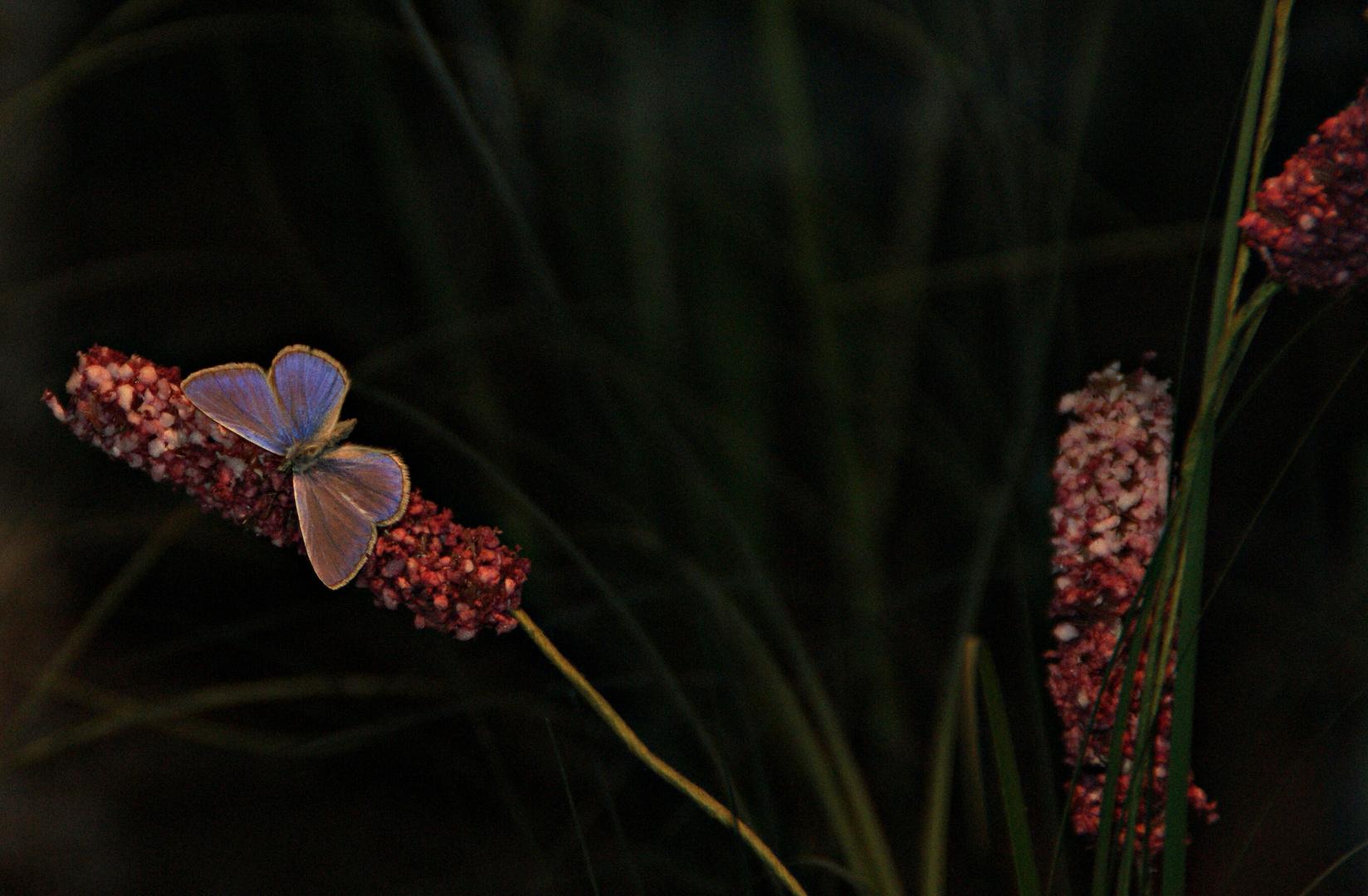 Schmetterlings=haus in Schmiding
