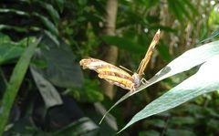 Schmetterlingshaus Insel Mainau 01