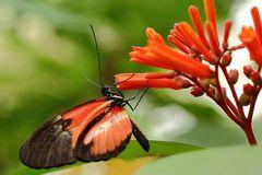 Schmetterlingshaus Mainau