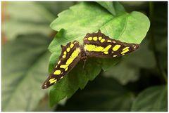 Schmetterlingshaus, Maximilianpark, Hamm,