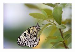 Schmetterlingshaus Zoo Krefeld