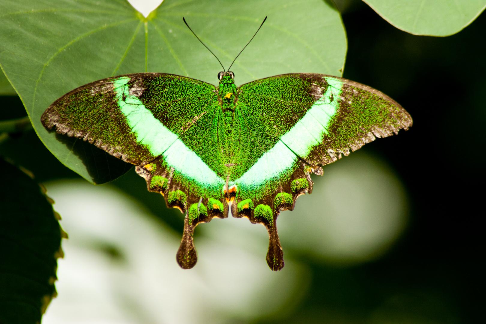 Schmetterlingshaus(1)
