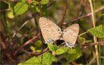 Schmetterlingshochzeit  . . . . auf Mallorca . . . !