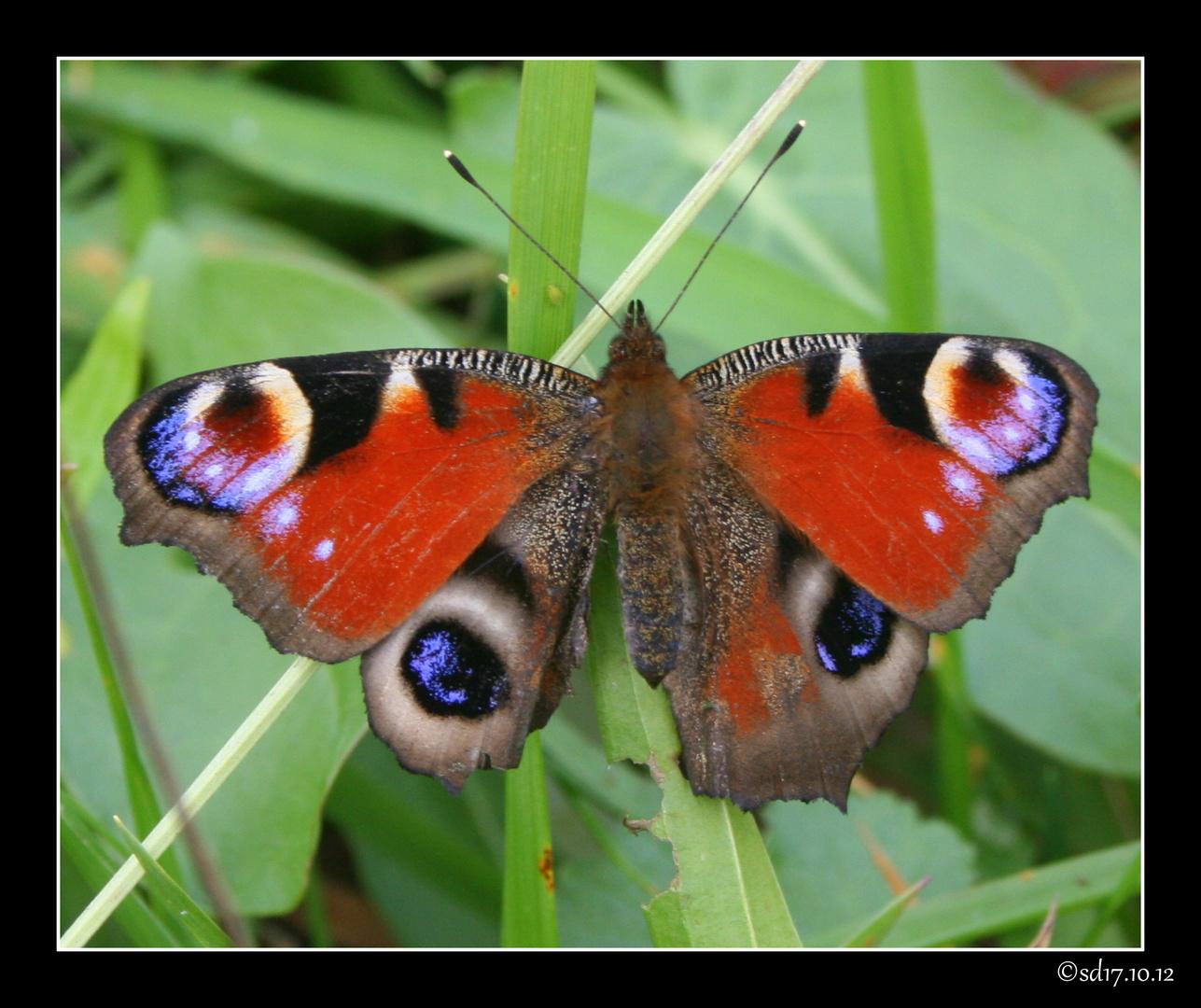 Schmetterling,,,,so schöööön
