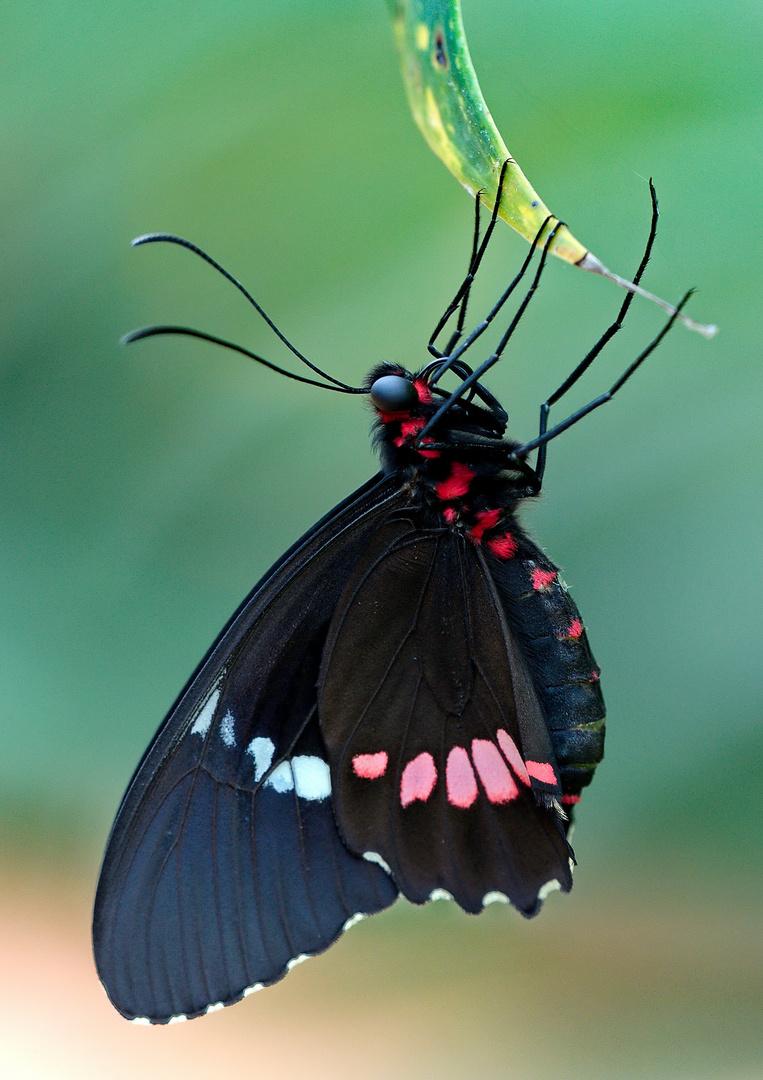 Schmetterlingspark....