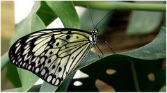 Schmetterlingspark Bendorf-Sayn