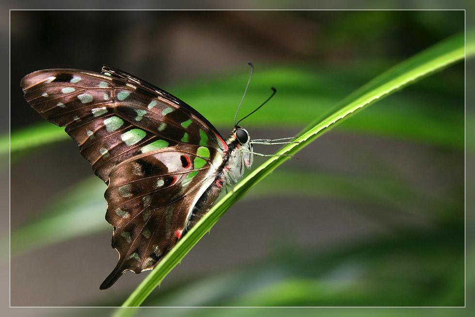 Schmetterlingspark Sassnitz #02