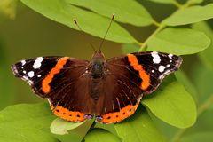 Schmetterlingsperspektive