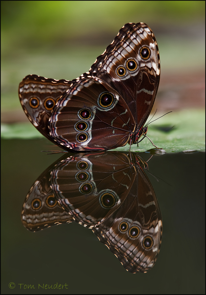 Schmetterlingsspiegel