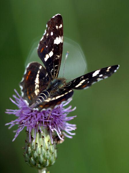 Schmetterlingsstart