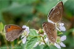 Schmetterlingszeit