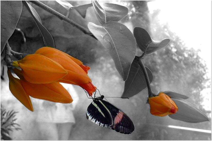 Schmetterlingtraum