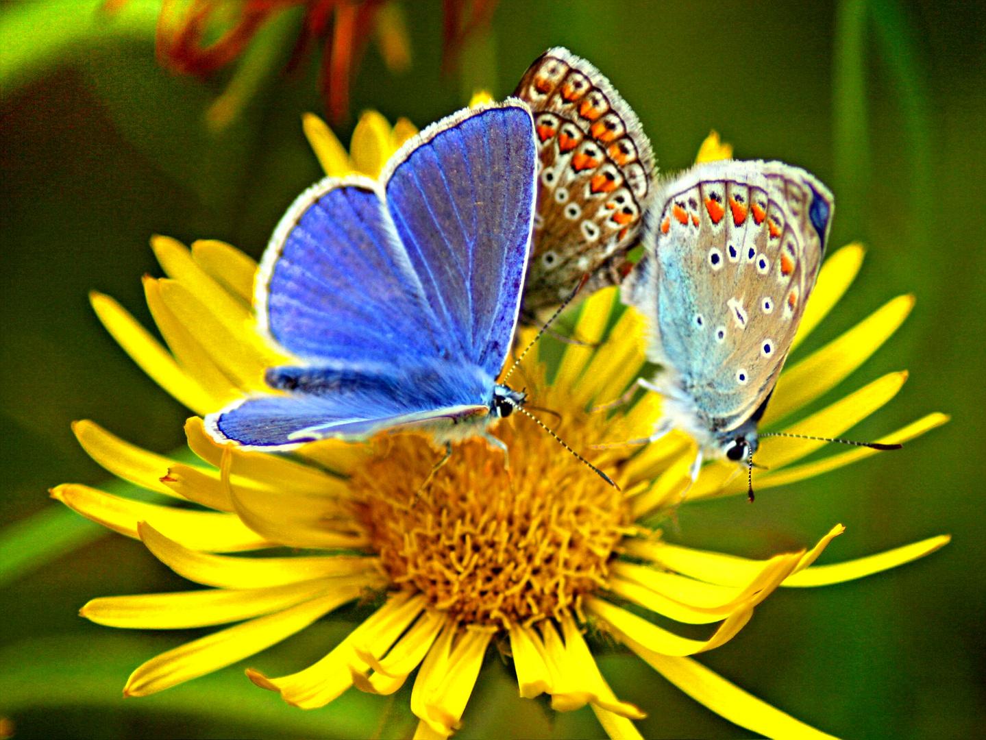 Schmetterlinsparty