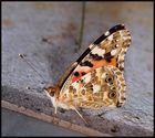 Schmetterpetter....