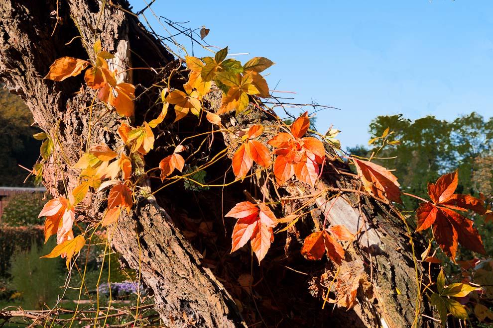 Schmuck für den alten Baum