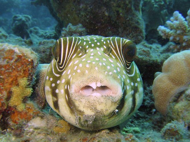 Schmuddelfisch....