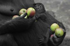 Schmus und Apfelmus