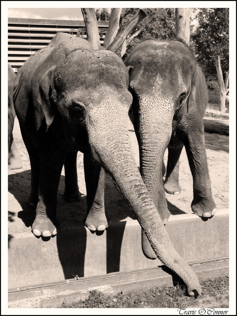 Schmusefanten