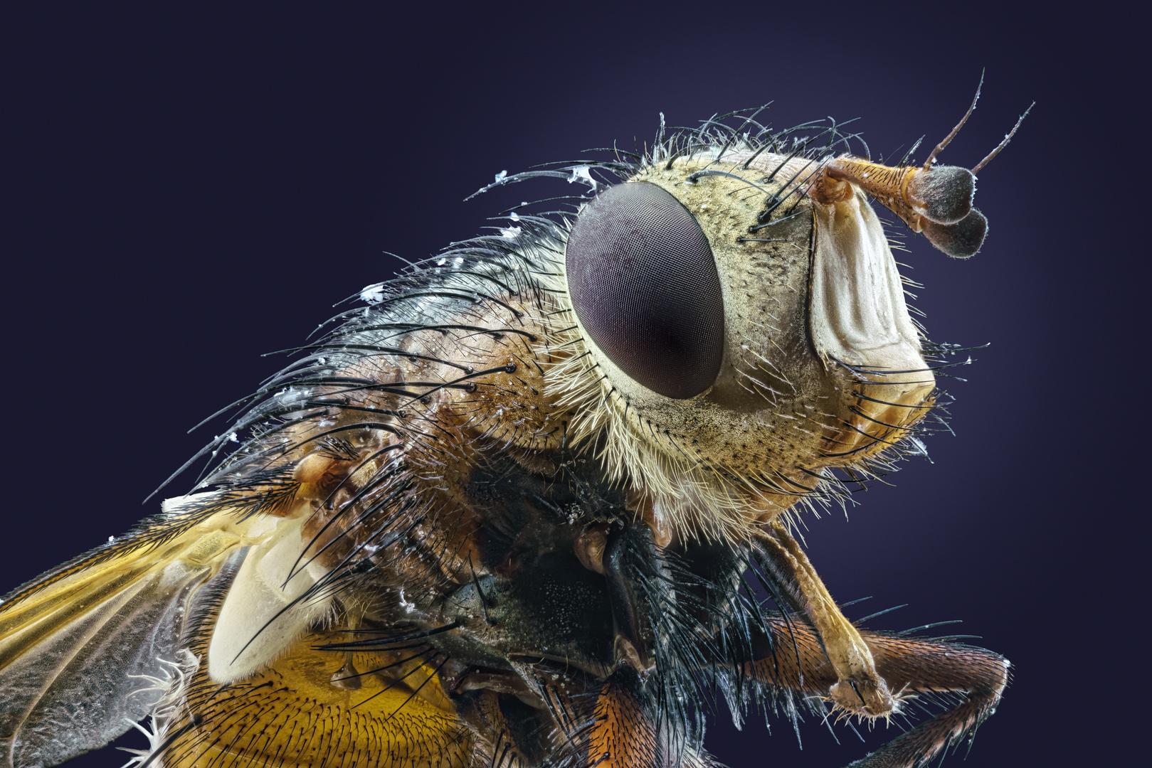 Schmutzige Fliege :-)