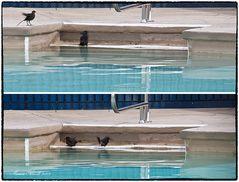 Schnappschuss am Pool