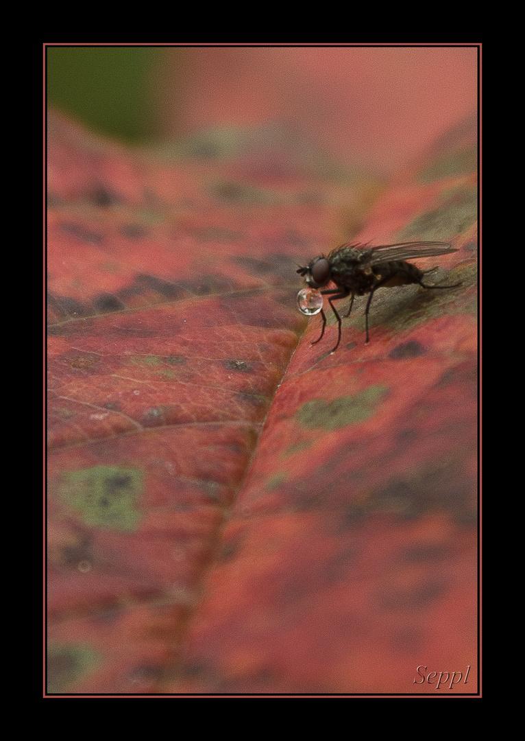Schnappschuss: Durstige Mücke