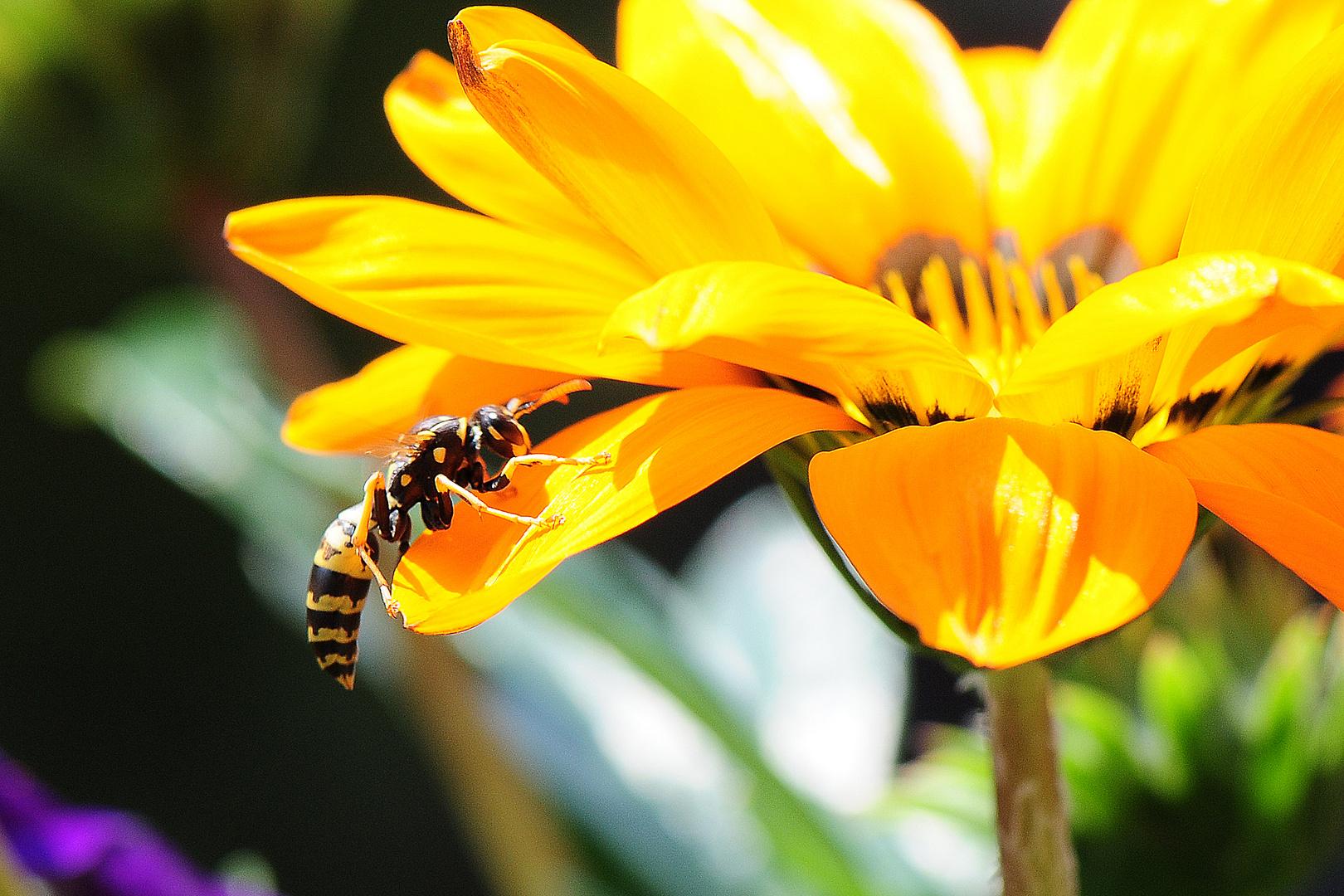 Schnappschuss im Blumenkasten