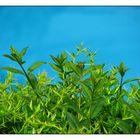 Schnappschuss in Blau-Grün