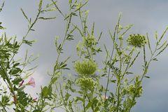 Schnappschuß mittags am Feldwegrand : plötzlich wird's grau am Himmel...fix nach Hause ! ;-),