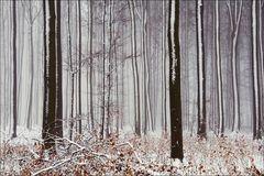 Schnebelwald