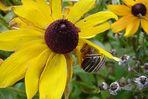 Schnecke auf der Blume