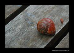 Schnecke auf Tisch