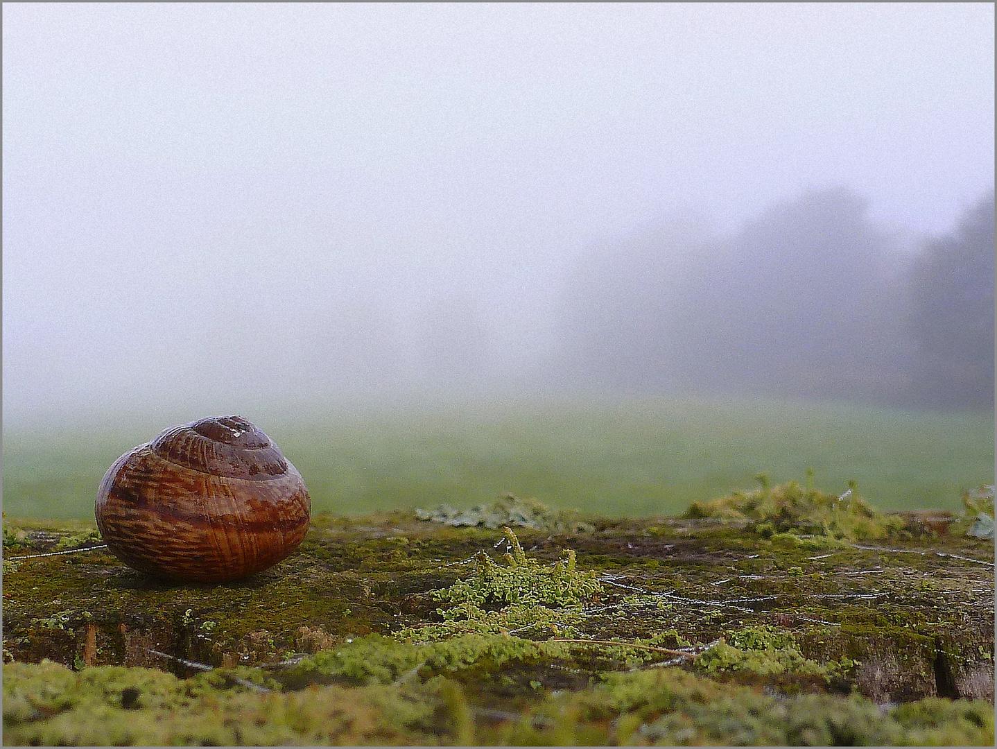 Schnecke im Haus auf Zaunpfahl im Nebel ....
