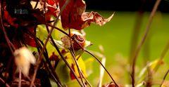 Schnecke im Herbst