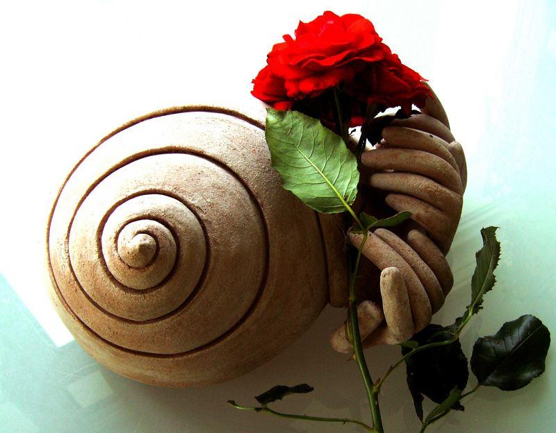 schnecke mit rose