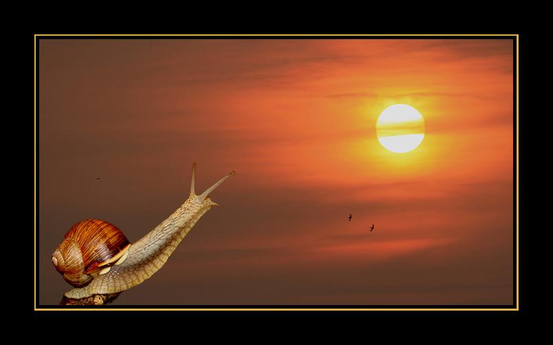Schnecke und Sonnenuntergang