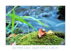 SCHNECKE_AUS_SPELTACH