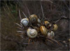 Schnecken-Nest