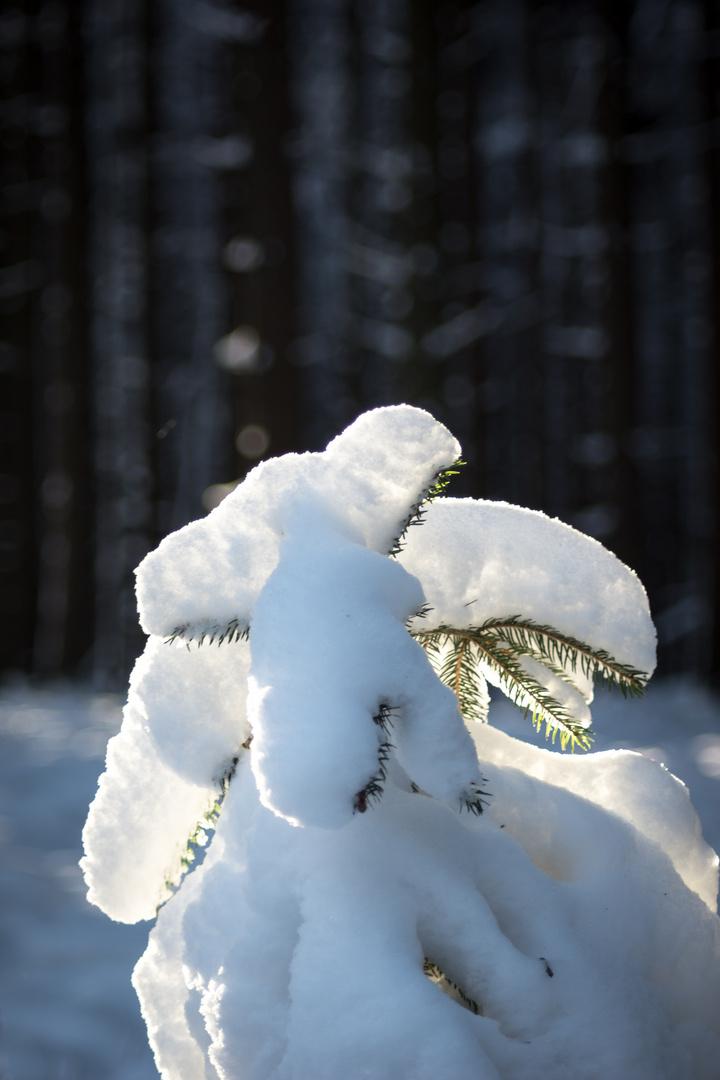 Schnee 01