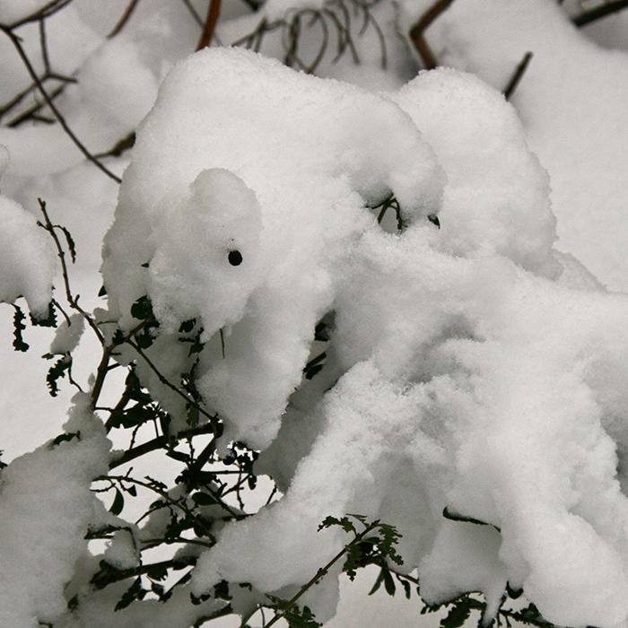 Schnee 8