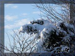 """>> """"Schnee"""" Adler << entdeckt! >> Wer vermisst ihn?"""