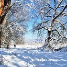 Schnee am Bodensee