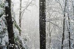 Schnee am Hauskopf