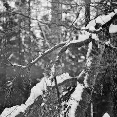 Schnee auf ....